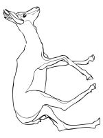 antelope-coloring-pages-2