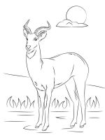 antelope-coloring-pages-3