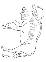 antelope-coloring-pages-5