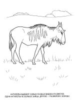 antelope-coloring-pages-8