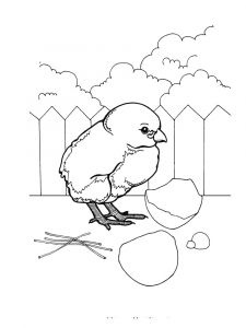 animals-baby-chick-coloring-pages-6