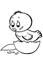 animals-baby-chick-coloring-pages-9