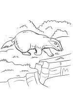 badger-coloring-pages-10