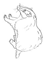 badger-coloring-pages-3