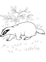 badger-coloring-pages-5