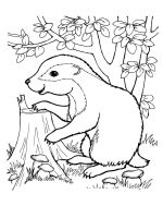 badger-coloring-pages-8