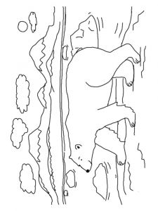 coloring-pages-animals-bear-12