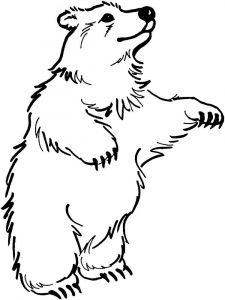 coloring-pages-animals-bear-16