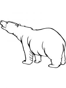 coloring-pages-animals-bear-7