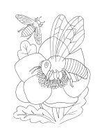 coloring-pages-bee-13