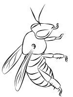 coloring-pages-bee-14