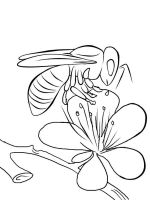 coloring-pages-bee-16