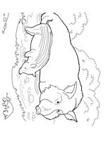 boar-coloring-pages-3