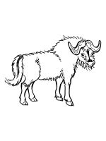 buffalo-coloring-pages-12