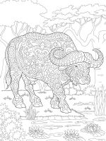 buffalo-coloring-pages-3
