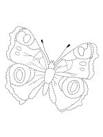 butterfly-coloring-pages-52