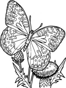 coloring-pages-animals-butterfly-2