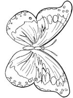 coloring-pages-animals-butterfly-21