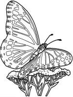 coloring-pages-animals-butterfly-26