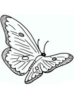 coloring-pages-animals-butterfly-29