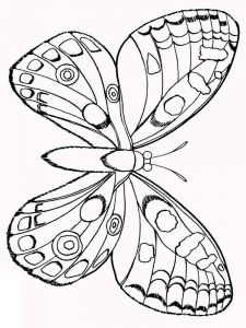 coloring-pages-animals-butterfly-30