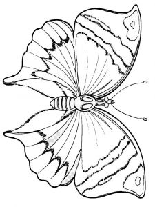 coloring-pages-animals-butterfly-31
