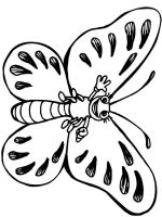 coloring-pages-animals-butterfly-33