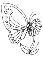 coloring-pages-animals-butterfly-5