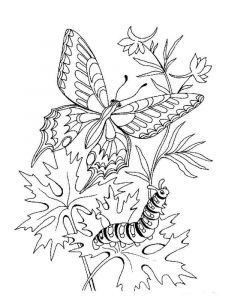 coloring-pages-animals-butterfly-7