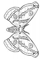 coloring-pages-animals-butterfly-8