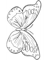 coloring-pages-animals-butterfly-9