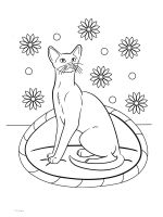cat-coloring-pages-54