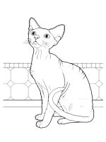cat-coloring-pages-56