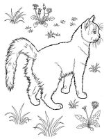 coloring-pages-animals-cats-15