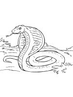 cobra-coloring-pages-20