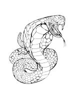 cobra-coloring-pages-33