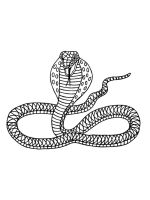 cobra-coloring-pages-34