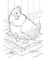 coloring-pages-animals-cock-13