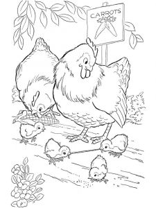coloring-pages-animals-cock-14