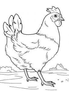 coloring-pages-animals-cock-15