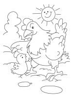 coloring-pages-animals-cock-4