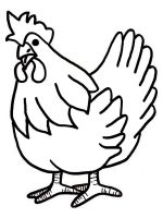 coloring-pages-animals-cock-7