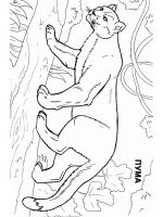 cougar-coloring-pages-5
