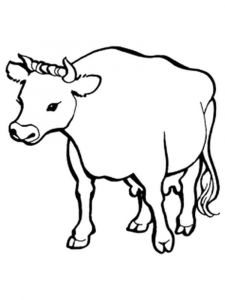 animals-cow-coloring-pages-13