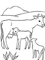 animals-cow-coloring-pages-4