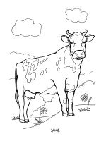 cow-coloring-pages-28