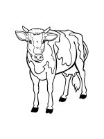 cow-coloring-pages-32