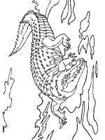 coloring-pages-animals-crocodile-9