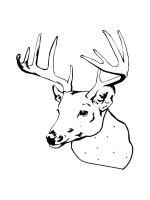 deer-head-coloring-pages-12
