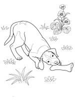 coloring-pages-animals-dogs-2